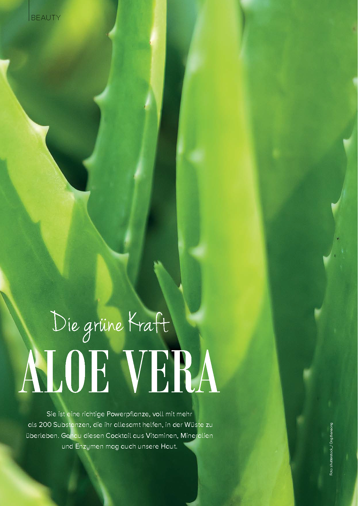 Aloe Vera - Die grüne Kraft